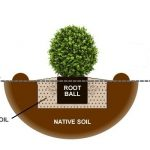 planting-a-shrub-http://Woodview.ie